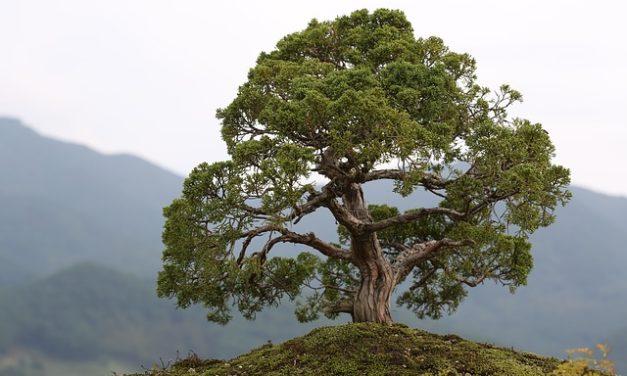 Disegnare da soli il bonsai: un tutorial