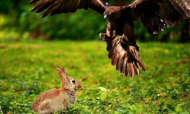 Fare il proprio cibo di coniglio: come rovinare il tuo animale domestico