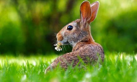 Giochi per conigli: Idee per attività per animali domestici