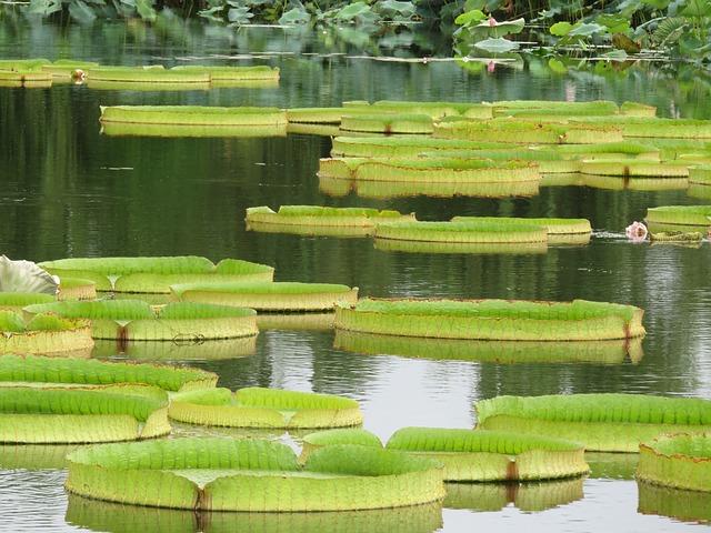 Malattie orchidee: foglie appiccicose: cosa fare?
