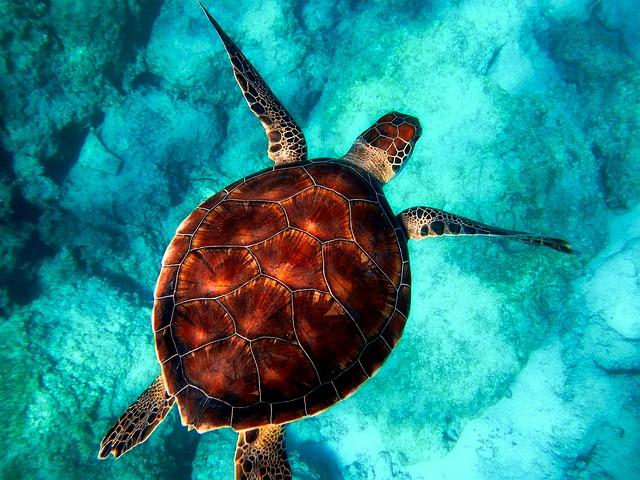 Quanto costano le tartarughe? Come calcolare i costi di acquisizione e manutenzione