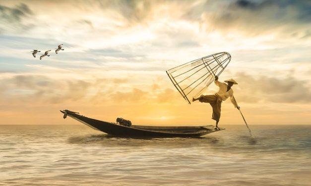 Piantare il gheriglio di pesca: questo è il modo migliore per far crescere un pesco