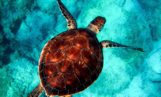 Trovare bellissimi nomi di tartarughe per il tuo animale domestico
