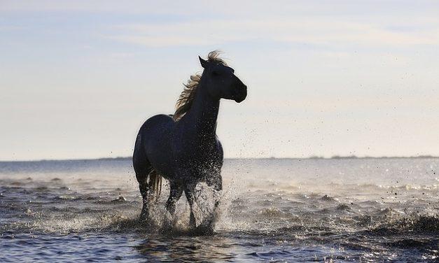 Acconciature a cavallo: istruzioni per una treccia spagnola