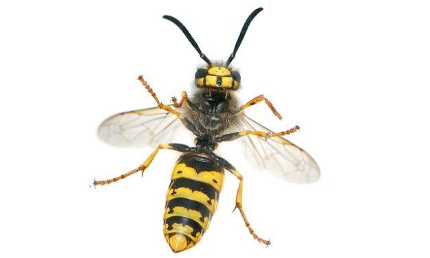 Rimozione del nido vespa: Chi paga? Come chiarire la questione dei costi