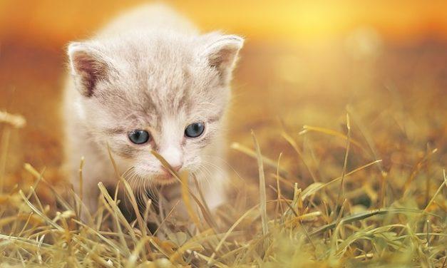 Bilance in pelliccia di gatto: come prendersi cura del tuo animale domestico correttamente