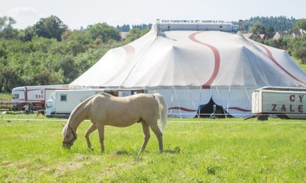 Come si può permettersi il proprio cavallo? Come calcolare i costi