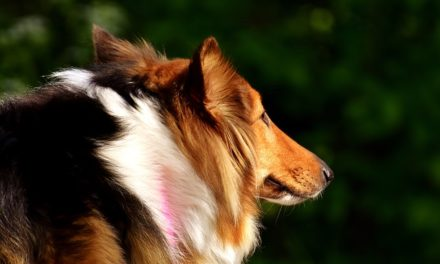 Maltese: i cuccioli sono addestrati a casa
