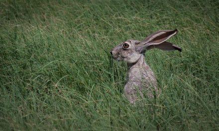 Quando gli occhi del coniglio acqua: questo è quello che si dovrebbe fare