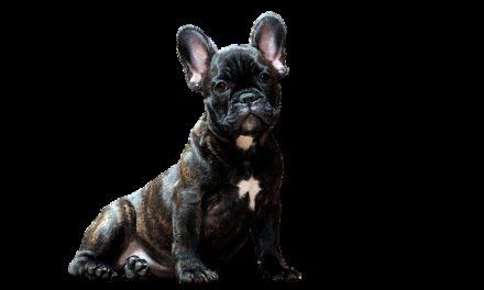 Trovare buoni nomi di cani facili da capire per il cane: ecco come funziona