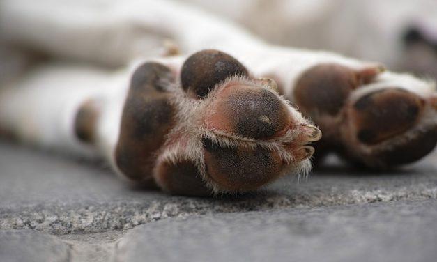 Dolore animale domestico: come riconoscerli