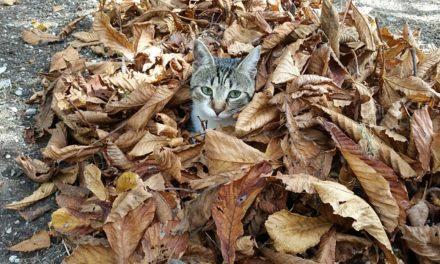 Gatto ha un freddo: cosa fare?