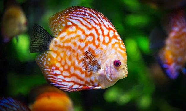 Osservare correttamente il periodo di rodaggio di un acquario