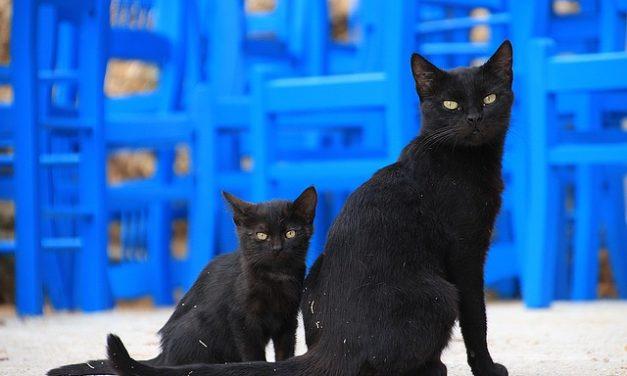 Separare il gatto bambino dalla madre: questo è come farlo correttamente
