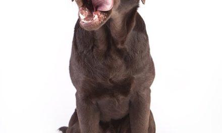 Cane mangia i capezzoli di cavallo – come agire correttamente