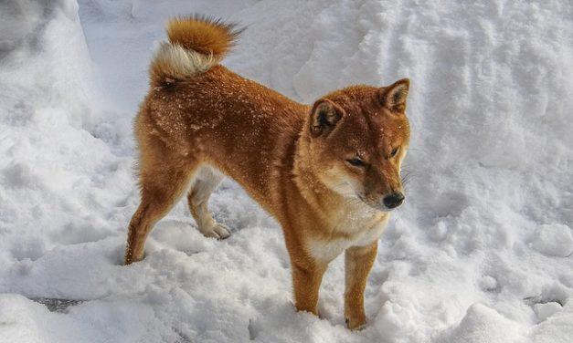 Gastrite nei cani: opzioni di trattamento