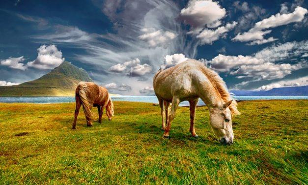 Imparare a mormorare i cavalli: ecco come funziona