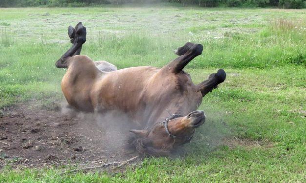 Rendere il proprio insetto repellente per i cavalli