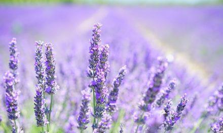 Creare il proprio giardino di erbe: Suggerimenti per i principianti