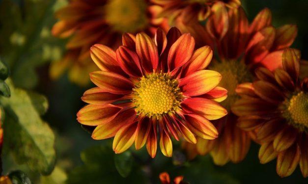 Disposizione dei fiori: Istruzioni