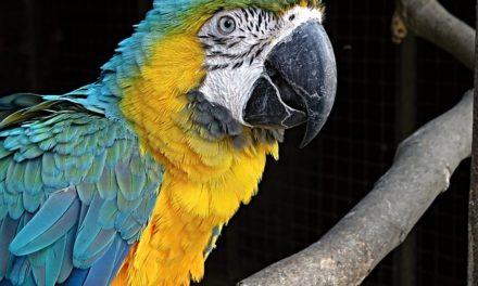 Domare le pappagallini: come funziona