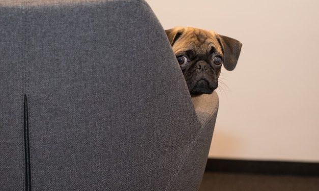 Cane crescere a bambino: come educare il tuo cane correttamente