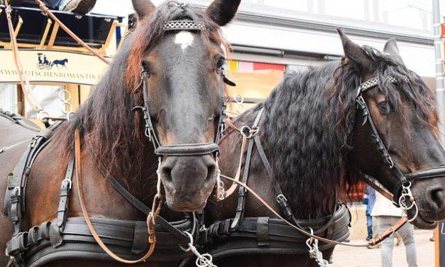 Insegnare un cavallo per imparare il Plié: ecco come si fa l'arco