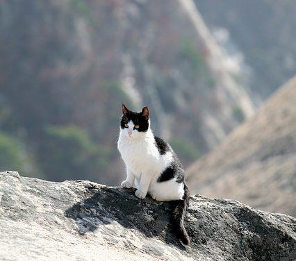 Nuovo gatto: come fare in modo che il tuo gatto si abitui alla tua nuova casa