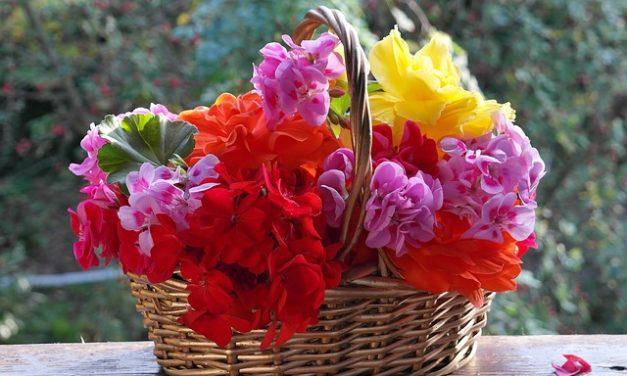 Piante da balcone per il sole: ecco come si trovano i fiori abbinati