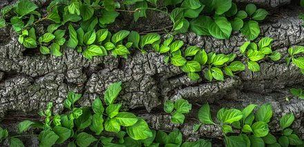 Corteccia di pino: Suggerimenti per l'uso