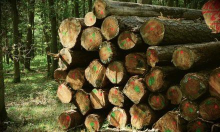 Impilatura della legna da ardere: come farlo correttamente