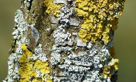 Rame contro le alghe nello stagno: questo è il modo in cui si utilizza la lamiera per i depositi verdi