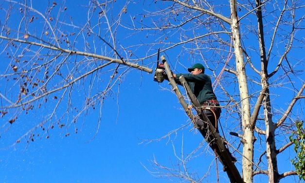 Taglio degli alberi: come ridurre i costi