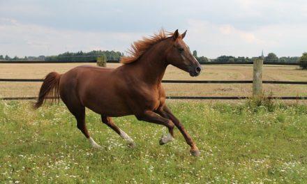 Cavallo: Velocità