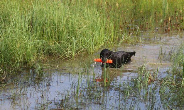 Cane sepolto: così si dice addio al tuo amico a quattro zampe con dignità