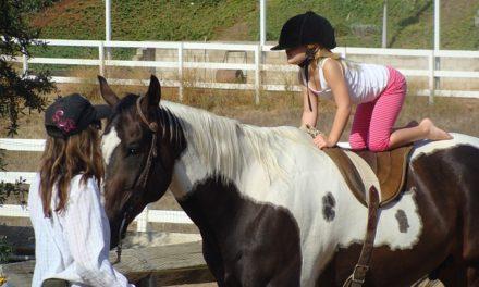 Insegnare il cavallo a scalare: come funziona con i cavalli