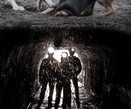 Cane mangia la terra: si può fare che contro di esso