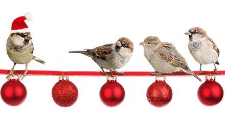 Scacciare i passeri: come sbarazzarsi degli uccelli