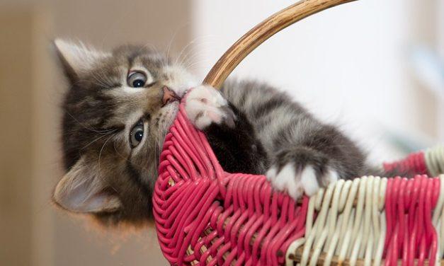 Abituarsi ai gatti: è così che si gestisce il freewheeling dei giovani gatti