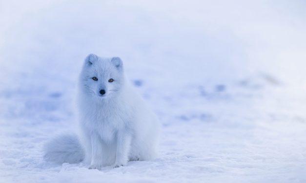 Fuchs: Proteggere il tuo animale domestico da lui è come questo