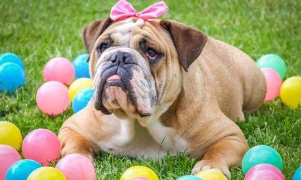 La debolezza della vescica nei cani – come affrontarla