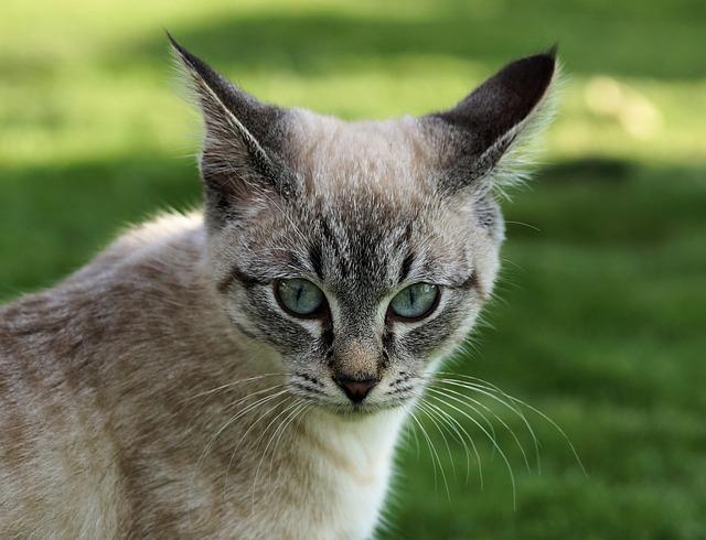 Impurità Cat: Cause e suggerimenti