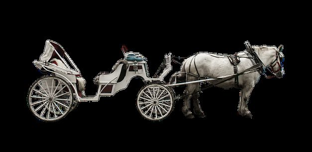 Islandesi al galoppo: in modo da poter calmare il cavallo continuo