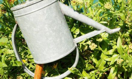 Pianta efficacemente vasche di zinco per il giardino come secchio