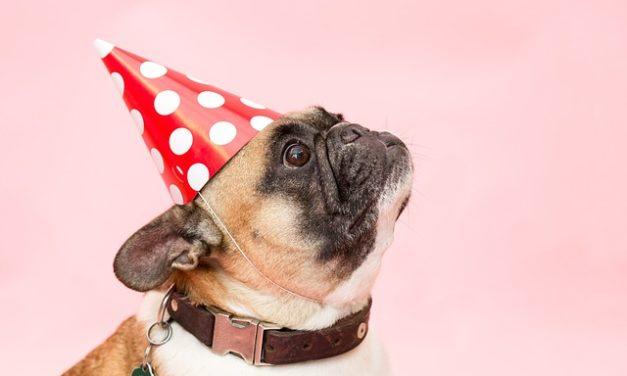 Razza cane lotta: Informazione