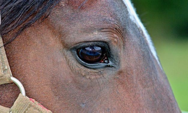 Sella correttamente un cavallo