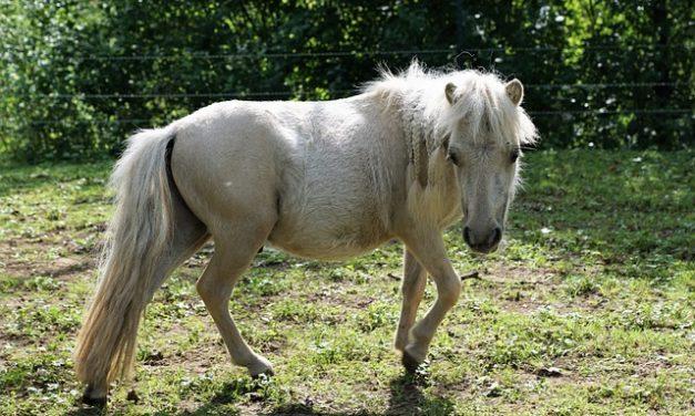 Fare il proprio passo con un pony: ecco come funziona