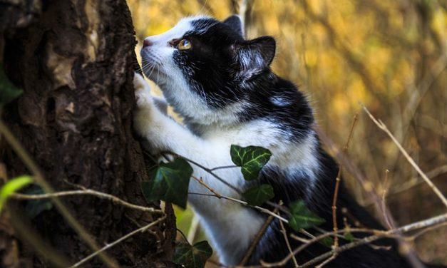 """Gatti nani: con questi punti di vista troverete """"il vostro tesoro""""."""