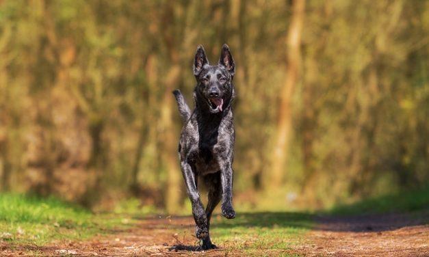 Giochi all'aperto per cani all'aperto: come ispirare il tuo migliore amico