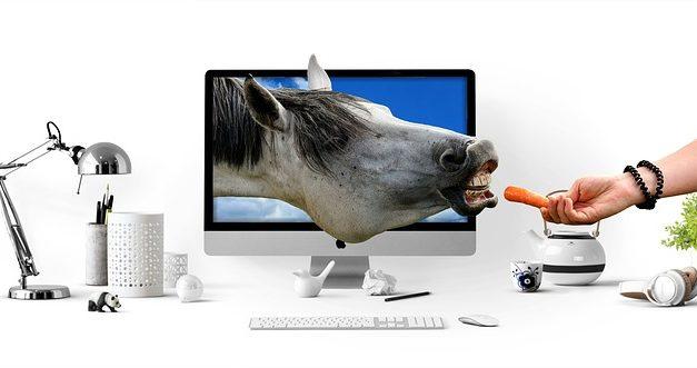 Giochi di cavalli e pony: come organizzare un bel torneo